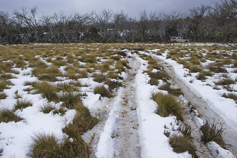 snow_licola-3