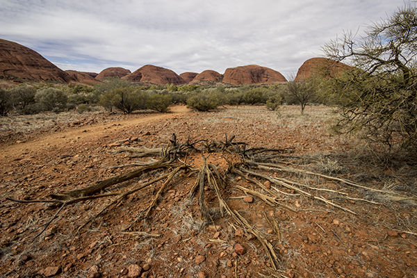 kata_tjuta_july2015-22