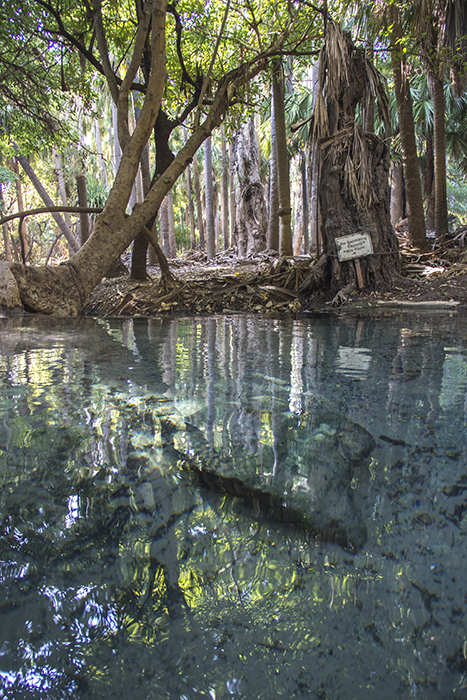mataranka_thermal_pools_august2015-41