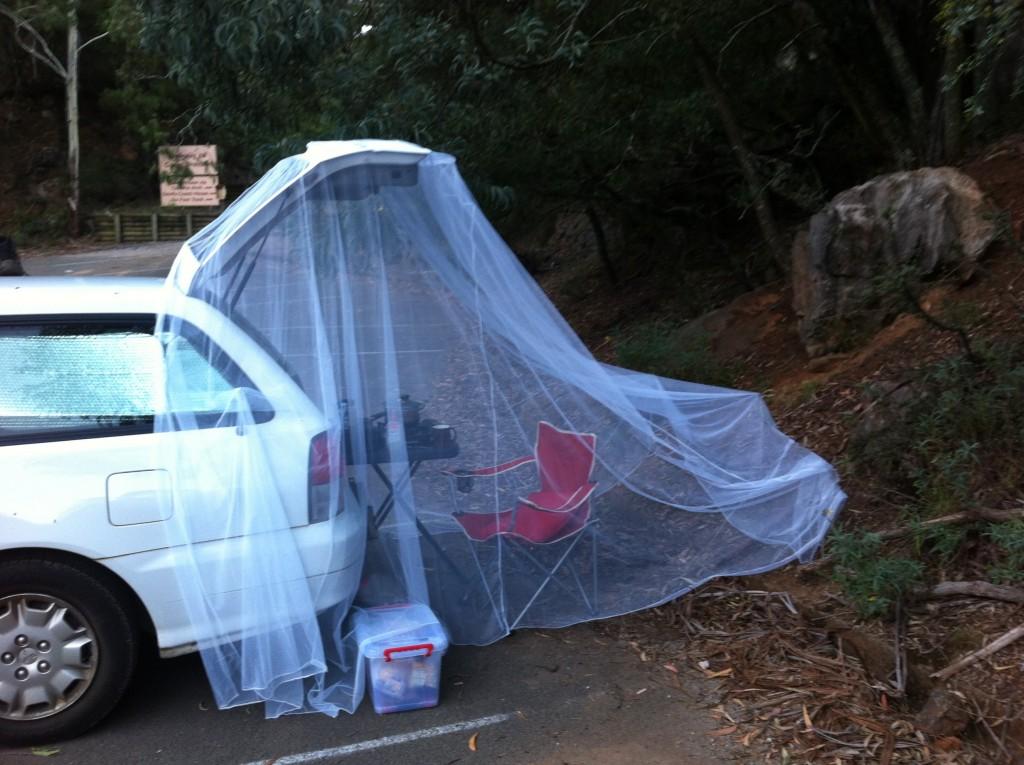 Si salvi chi può dalle zanzare!